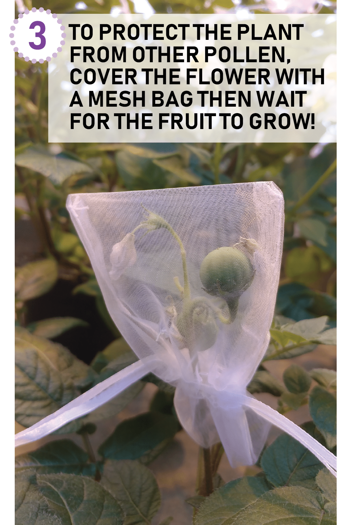 mesh bag protects plant